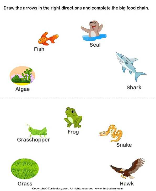 Food Chains and Food Webs Skills Worksheet Answers or 161 Best Food Chains Webs Ecosystems and Biomes Images On