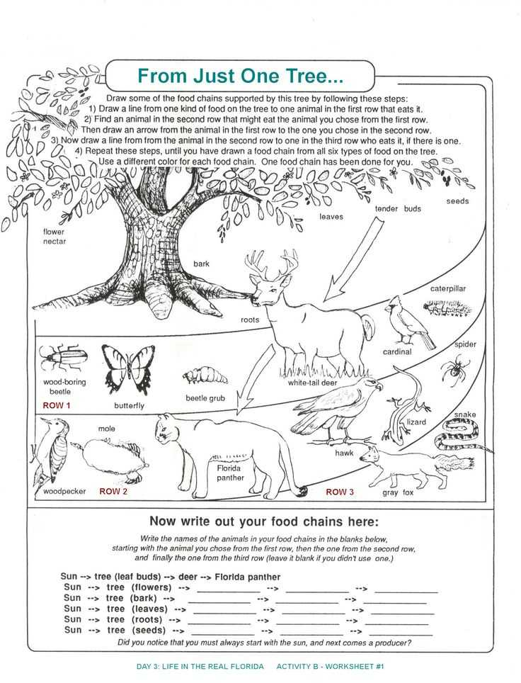 Food Chains and Food Webs Skills Worksheet Answers or 251 Best Animal Food Chains Images On Pinterest