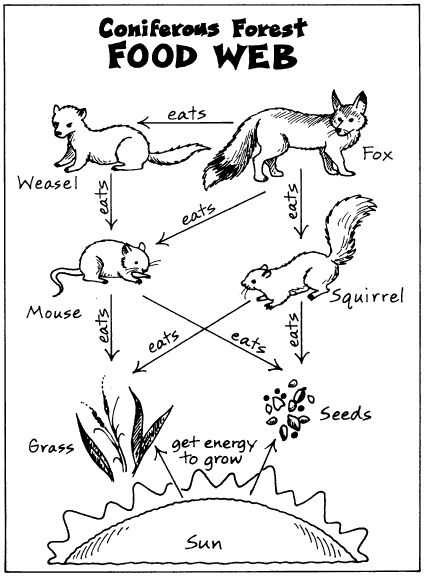 Food Web Worksheet Along with 21 Best Food Chain Images On Pinterest