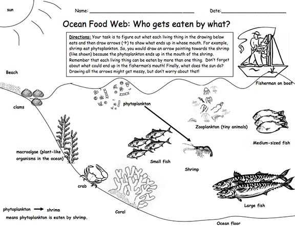 Food Web Worksheet Answer Key with 101 Best Food Chains Webs Images On Pinterest