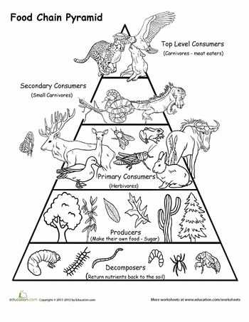 Food Web Worksheet Answer Key with 60 Best Habitats & Food Chains Images On Pinterest