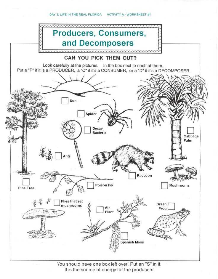 Food Web Worksheet with 161 Best Food Chains Webs Ecosystems and Biomes Images On