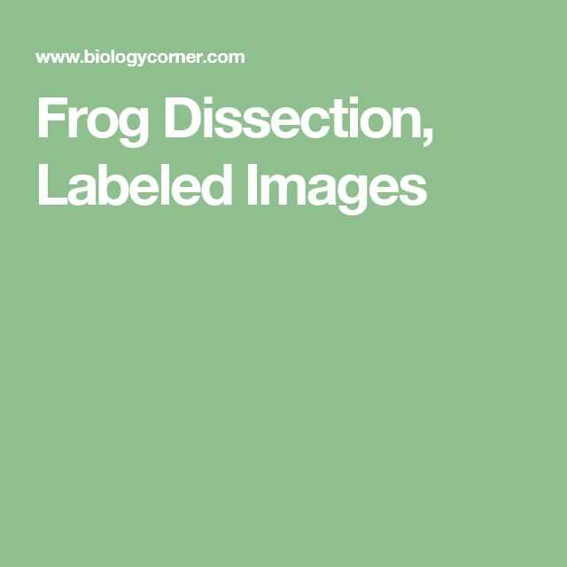 Frog Dissection Worksheet Answers together with 9 Best Frog Dissection Images On Pinterest