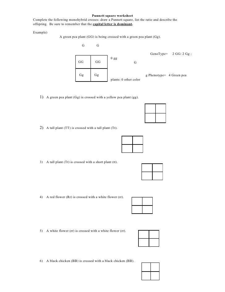 Genetics Pedigree Worksheet and Punnett Square Worksheet by Kpolson Via Slideshare