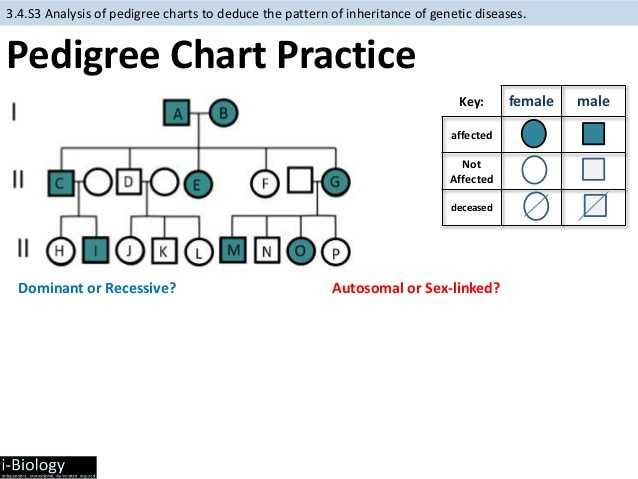 Genetics Pedigree Worksheet Key as Well as Genetic Pedigree Worksheet the Best Worksheets Image Collection