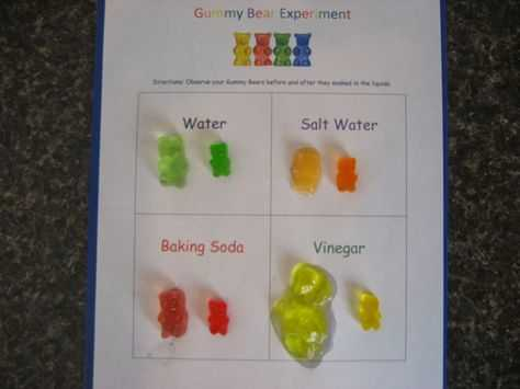 Gummy Bear Science Experiment Worksheet Also Science Project Grow A Gummy Bear
