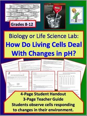 Holt Biology Cells and their Environment Skills Worksheet Answers Along with 60 Best Cells Images On Pinterest