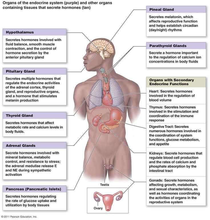 Human Endocrine Hormones Worksheet with 21 Best the Explanation Of Endocrine Gland Hormones and Its Function