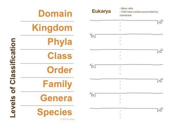 Kingdom Classification Worksheet Answers Also 22 Best Classification Lessons and Resources for Biology Images On