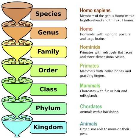 Kingdom Classification Worksheet Answers and 11 Best Classification Chart Images On Pinterest