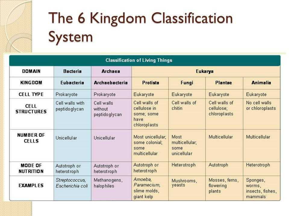 Kingdom Classification Worksheet Answers as Well as Kingdom Classification Worksheet Choice Image Worksheet Math for Kids