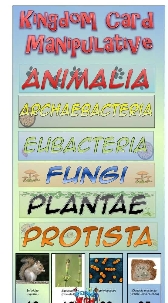 Kingdom Classification Worksheet Answers as Well as Kingdoms Of Life Card sort Manipulative