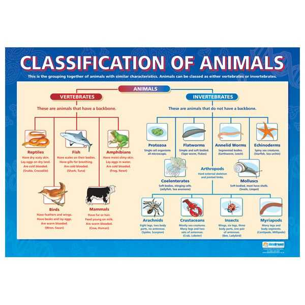Kingdom Classification Worksheet Answers together with 11 Best Classification Chart Images On Pinterest