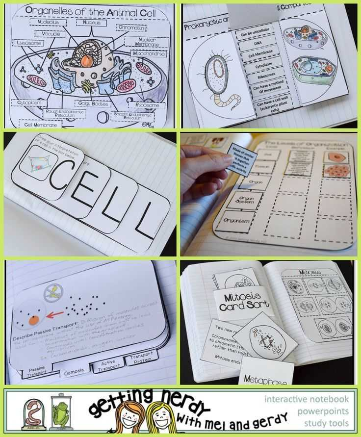 Lesson 7.2 Cell Structure Worksheet Answers or 951 Best Interactive Notebook Ideas Images On Pinterest
