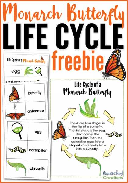 Monarch butterfly Worksheets with Monarch butterfly Life Cycle Printables