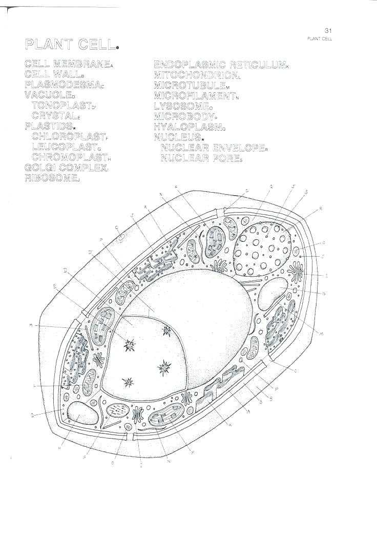 Plant Cell Coloring Worksheet Key with Plant Cell Coloring Answers – Benneedhamfo