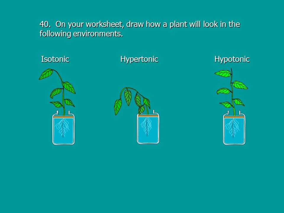 Pond Water Microscope Lab Worksheet Along with Osmosis Ppt Video Online