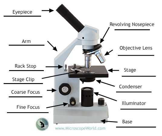 Pond Water Microscope Lab Worksheet together with 53 Best Science Activities with Microscopes Images On Pinterest