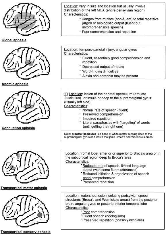Printable Aphasia Worksheets Along with 174 Best Aphasia Tbi Ot Pt Slp Images On Pinterest