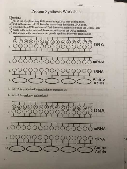Protein Synthesis Review Worksheet Answers Along with Unique Transcription and Translation Worksheet Answers New Rna and
