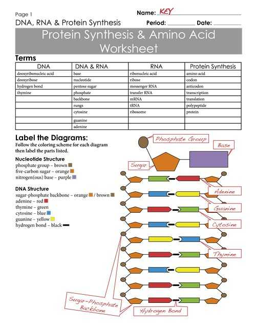 Protein Synthesis Worksheet Also 712 Best Ap Biology Images On Pinterest