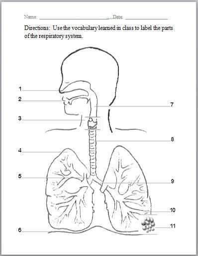 Respiratory System Worksheet Along with 10 Best Digestive System Images On Pinterest