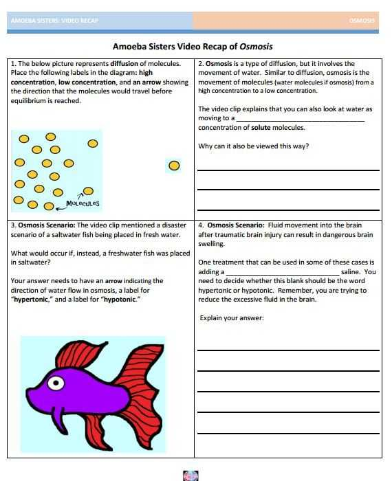 Science 8 Diffusion and Osmosis Worksheet Answers Also 27 Best Amoeba Sisters Handouts Images On Pinterest