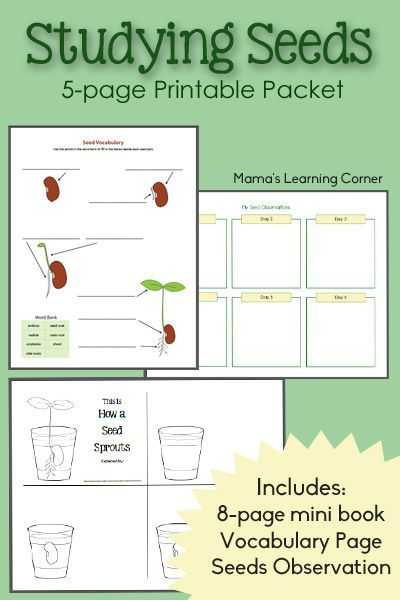 Science Worksheets Special Education with Studying Seeds – Printable Mini Book Seed Chart and Vocabulary