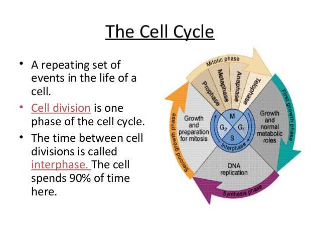 The Cell Cycle Coloring Worksheet Questions Answers and Anatomy and Physiology Cell Transport and the Cell Cycle