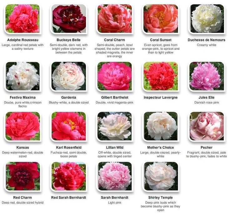 Types Of Floral Arrangements Worksheet Along with 139 Best Flower Arranging Knowledge Bank Images On Pinterest