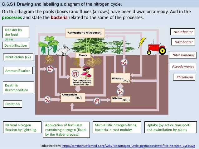 Water Carbon and Nitrogen Cycle Worksheet Answers Along with Water Carbon and Nitrogen Cycle Worksheet Answers Fresh Bioknowledgy
