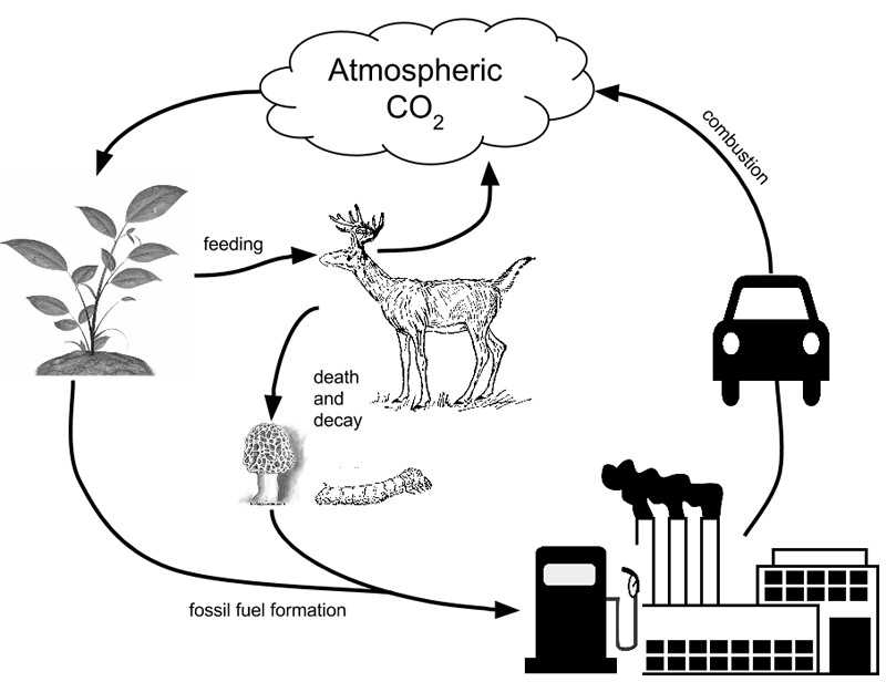 Water Carbon and Nitrogen Cycle Worksheet Answers as Well as the Carbon Cycle Worksheet Answers Worksheet Math for Kids