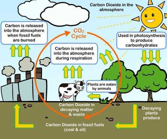 Water Carbon and Nitrogen Cycle Worksheet Answers together with Water Carbon and Nitrogen Cycle Worksheet Answers Fresh Gas