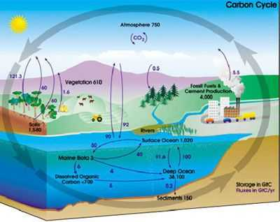 Water Carbon and Nitrogen Cycle Worksheet Answers with 30 Best the Carbon Cycle Images On Pinterest
