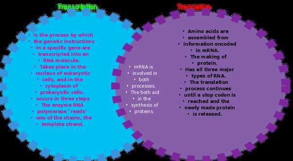 Worksheet On Dna Rna and Protein Synthesis Answer Key Quizlet or What are the Major Differences Between Transcription and Translation