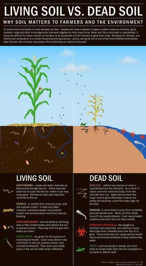 Accompanies soil Conservation Student Worksheet with 38 Best Teach soil Health Images On Pinterest