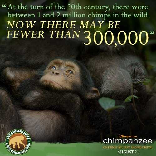 Among the Wild Chimpanzees Worksheet Answers Also 74 Best Disneynature Images On Pinterest