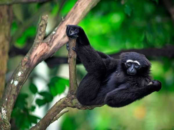 Among the Wild Chimpanzees Worksheet Answers or 47 Best Homeschool Primate Unit Study Science Images On