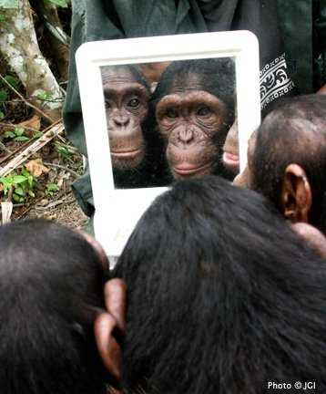 Among the Wild Chimpanzees Worksheet Answers together with 32 Best Jane Goodall Images On Pinterest