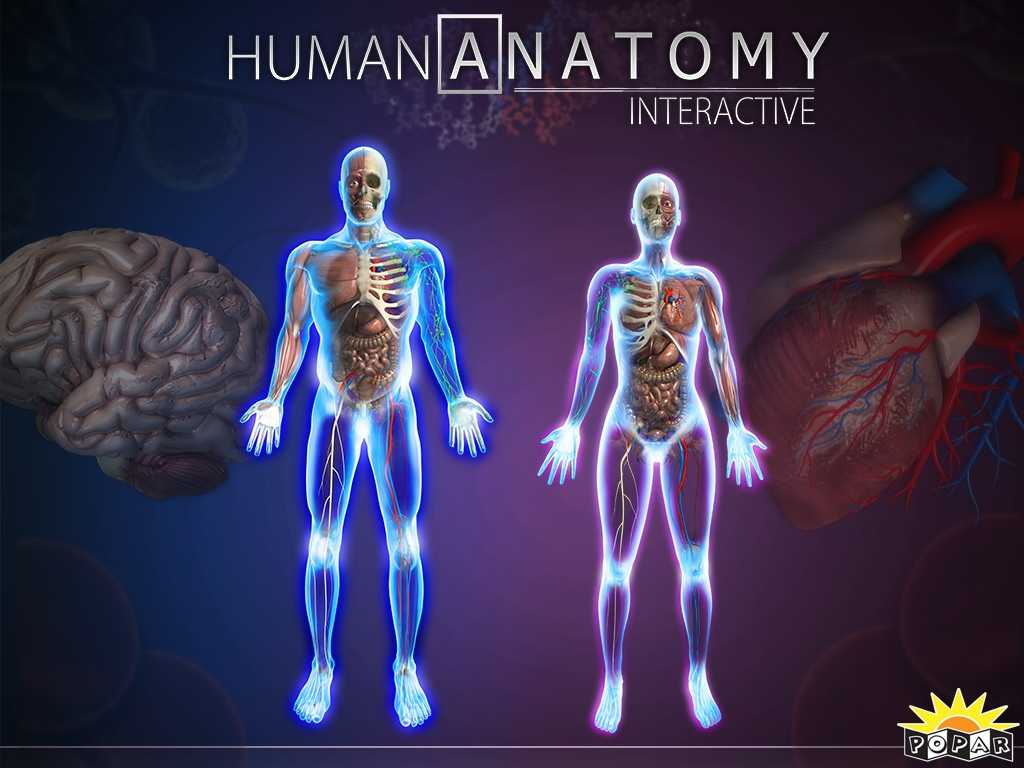 Anatomy and Physiology Worksheets and Interactive Human Body