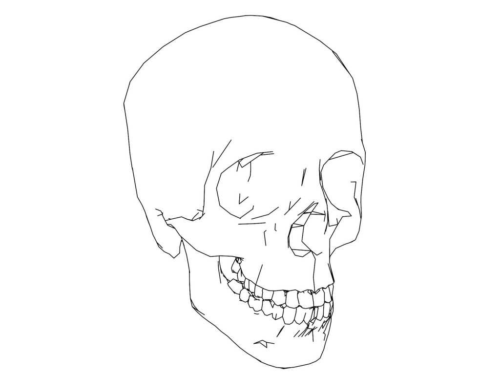 Anatomy and Physiology Worksheets and Parts Skull Picture Sketch Drawing Coloring Page Wecolori
