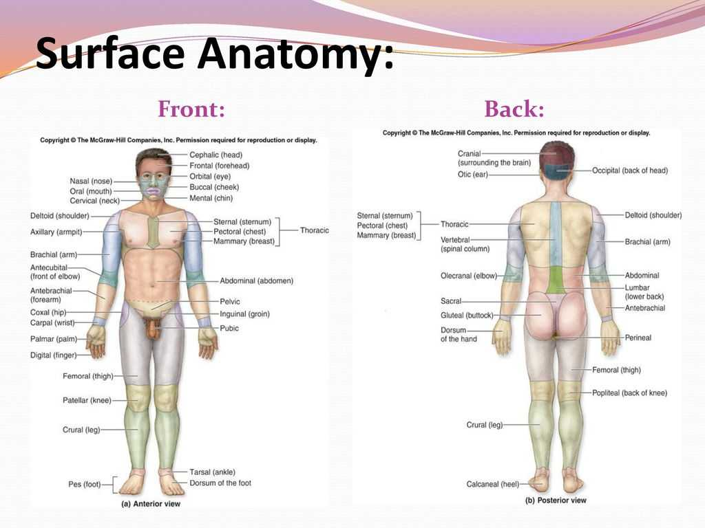 Anatomy and Physiology Worksheets with Basic Medical Terminology 1 Ppt