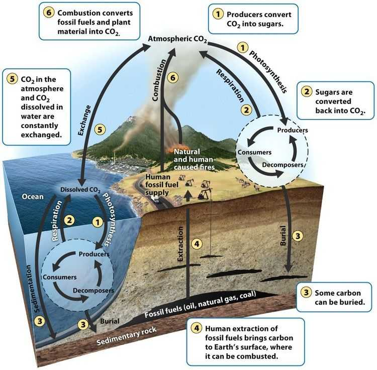 Carbon Cycle Worksheet as Well as the Carbon Cycle Producers Take Up Carbon From the atmosphere and