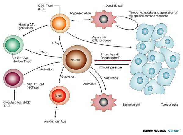Cells Of the Immune System Student Worksheet Answers and 32 Best Cancer Images On Pinterest