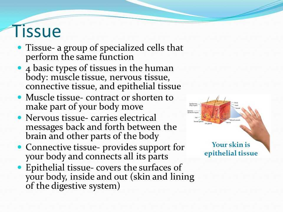 Cells Tissues organs organ Systems Worksheet and Sections 1 and 4 Levels Of organization Human Body Consists Of