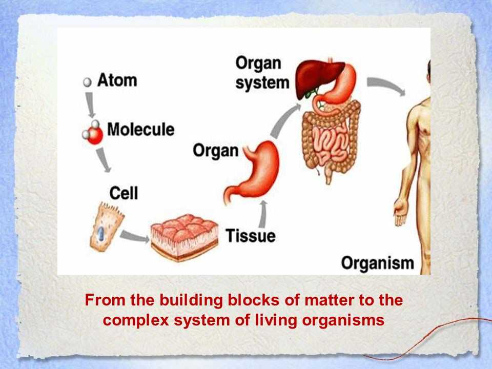 Cells Tissues organs organ Systems Worksheet and the Amazing Creation Of Life Cells Tissues organs organ