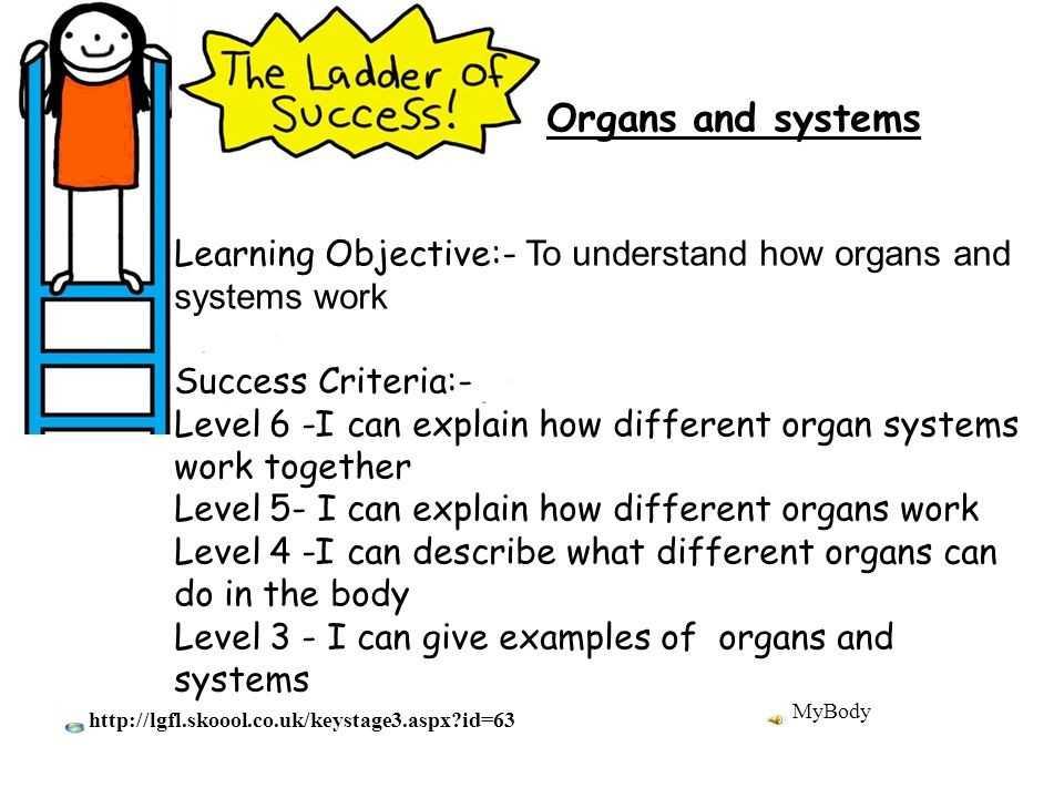 Cells Tissues organs organ Systems Worksheet as Well as 33 New Cells Tissues organs organ Systems Worksheet