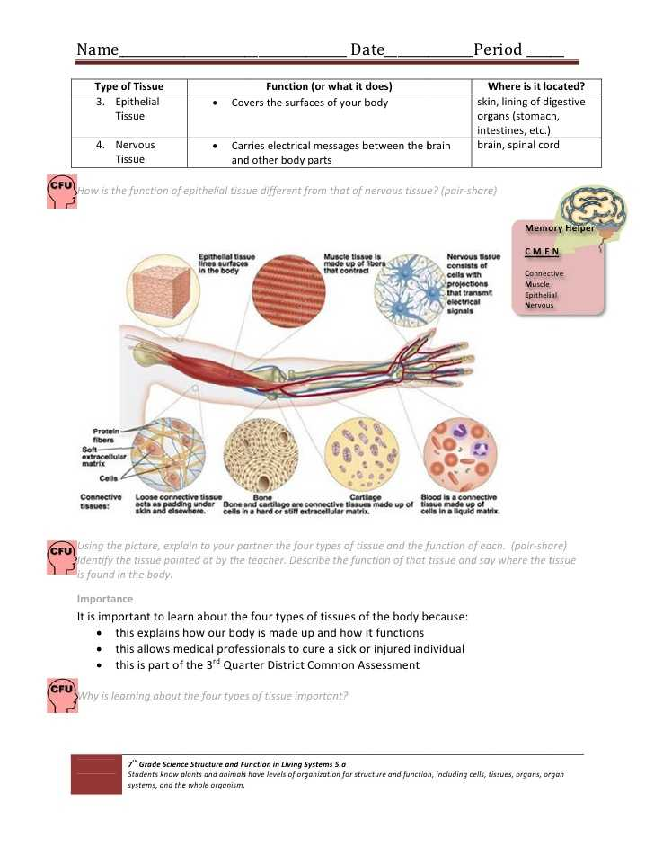 Cells Tissues organs organ Systems Worksheet as Well as Cell & Tissue Handout