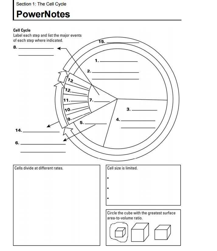 Chapter 10 Cell Growth and Division Worksheet Answer Key and Mr Lopez S Biology Class October 2015