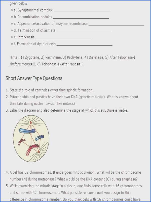 Chapter 10 Cell Growth and Division Worksheet Answer Key or Mitosis Worksheet Answer Key